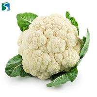 New Harvested Chinese Fresh Cauliflower