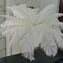 Hot sale high quality White and dyed 60-65cm Ostrich Feathers