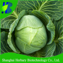 Quality cabbage seeds with best price