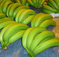 BEST QUALITY FARM FRESH CAVENDISH BANANA FOR SALE