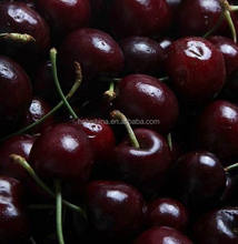 hot sale high quality fresh cherry export