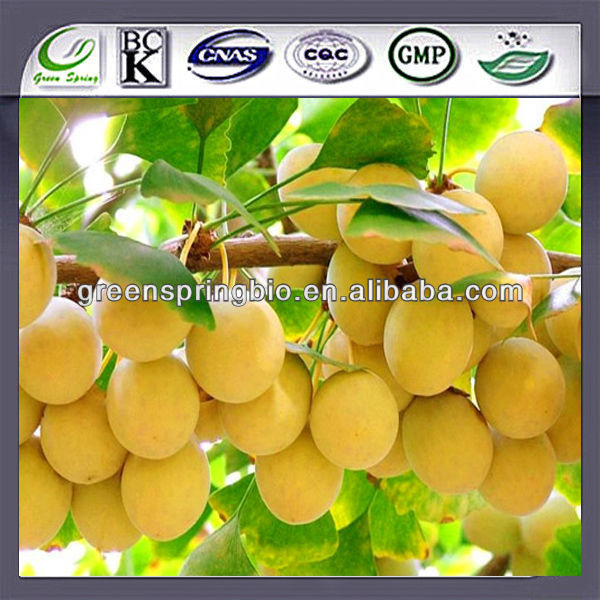 100% natural Ginkgo Biloba P.E(24%/6%), flavonoids powder