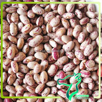 Round Red and White Speckled Kidney Beans Wholesale
