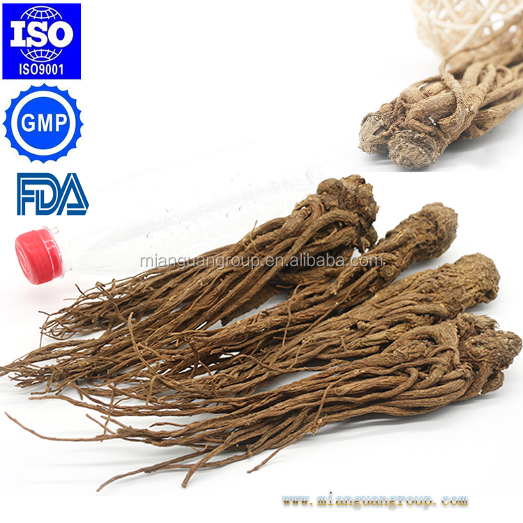 GMP certificated Chinese Angelica