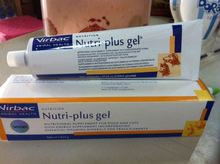 Virbac Nutri Plus Gel Puppies Dog Breeders Weak Sick Animal Well-Being