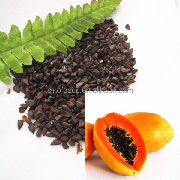 Sale High germination high qaulity Papaya Seeds for sell
