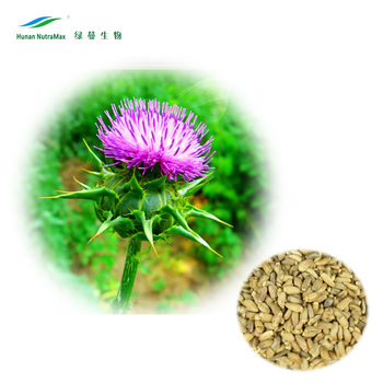 NON-GMO certified Milk Thistle Extract Powder Silymarin 80% Silybin 50% 55% with Low Price