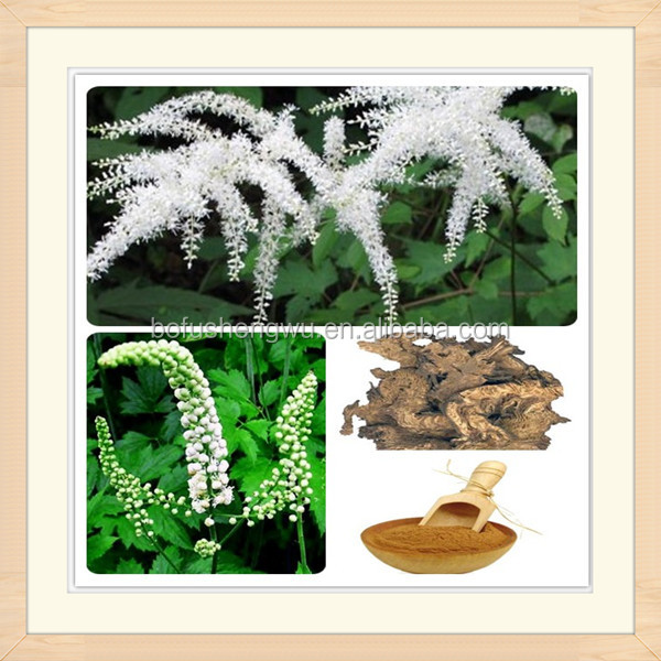 natural black cohosh extract powder/black cohosh roots/pure black cohosh extract