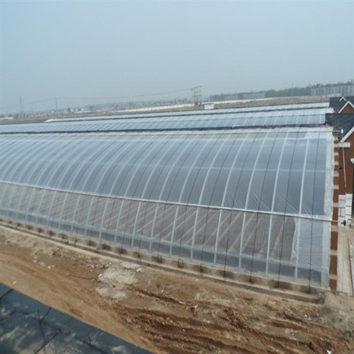 polycarbonate greenhouses for mushroom