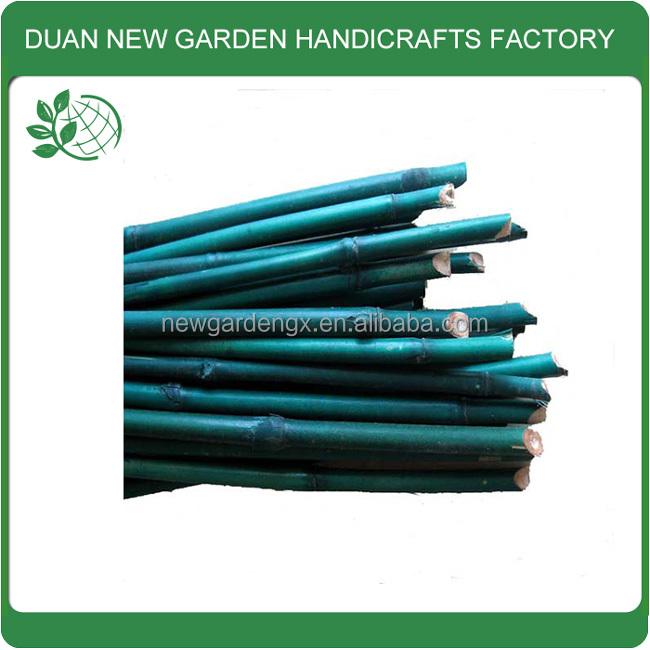Pianta di bamb verde colore stakes materie prime di bambu for Pianta bambu prezzo