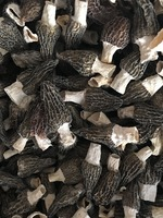 High quality morels/morilles/morchella conica/cultivate morels/morel mushroom