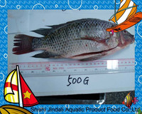 500-800G/PCS BQF Frozen whole black Tilapia