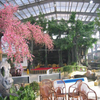 Beautiful Restaurant Greenhouse For Sale
