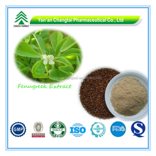 GMP Factory Supply Organic herbal medicine for penis enlarge/ fenugreek seed extract