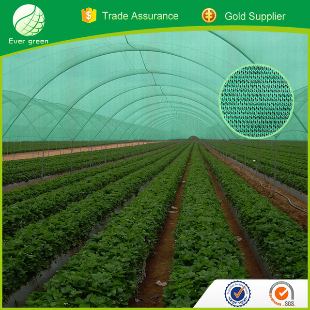 Agricultural Green Color Shade Netting For Greenhouse