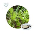 Factory wholesale anti-hangover natural organic Teng Tea Vine Tea Extract