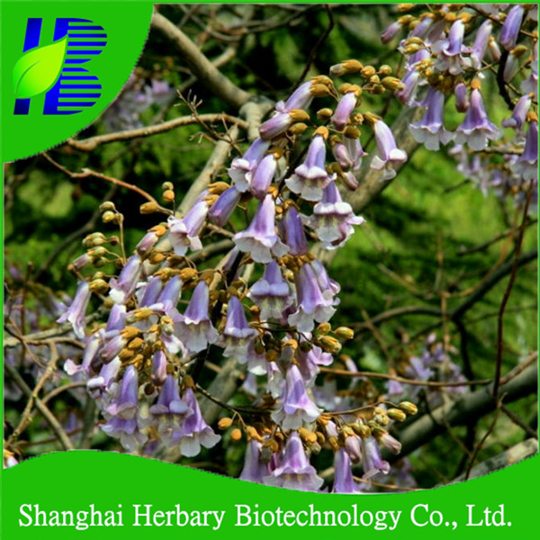 Flood resistant paulownia seed hybrid shan tong