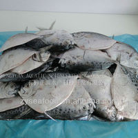 Chinese Frozen Moon Fish