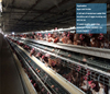 Fully automatic poultry cage system/chicken breeding system for cheap sale