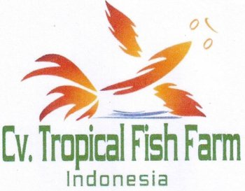 Live tropical fish buy live tropical fish product on for Buy tropical fish online