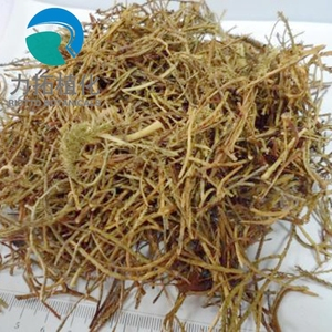 100% Natural Lycopodium japonicum Thunb. Extract