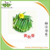 Natural Okra Extract powder okra seed extract with good price