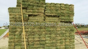 ALFALFA HAY- Fair Grade - Compressed Bale - 16/18 % Protein - For Sale ! Available