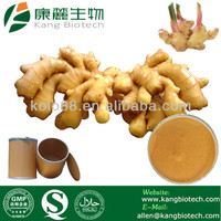 Natural Plant Extract Gingerols 5% 6% Ginger Extract