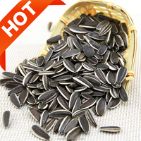 Best raw sunflower seeds in shell 5009/363 factory supply edible long size big kernel new crop China Origin wholesaler price