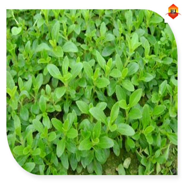 Wholesale Organic stevia from China Factory directly cas:5897-87-7