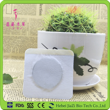 Herbal products slim patch best selling hot chinese products