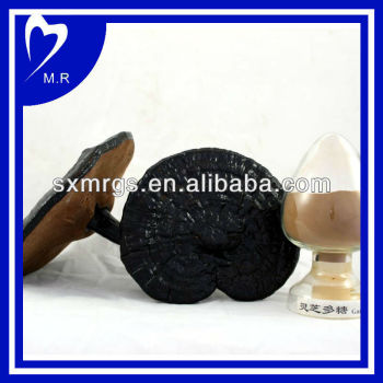 shell broken ganoderma lucidum spore powder
