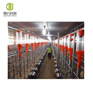 Auto feeding system livestock automatic feeder Deba pig equipment