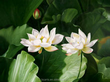 Beautiful home picture vivid white flowers oil painting water lily