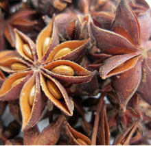 dried star anise seeds with stems