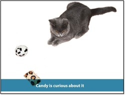 2016 Pet toy bulk Small Catnip Cat Toys