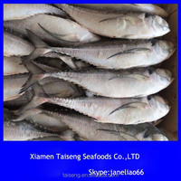 Land Frozen & Sea Frozen Horse / Hardtail Mackerel