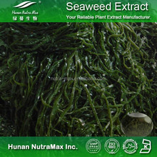 Factory Supply Straight Kelp Seaweed Powder Food Grade