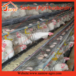 Hot galvanized multi stacking commercial chicken egg layer cages large animal cages for sale