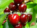 Organic Cherries & Sour Cherries