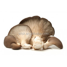 Good quality and low price harvesting oyster mushroom grain spawn history