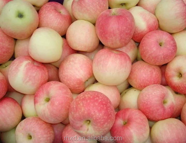 New crop Royal gala/ Fuji apple for India market