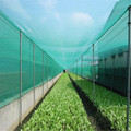 50*25Mesh 4m*100m Anti Insect Netting