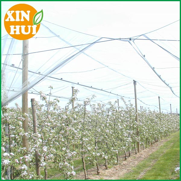 HDPE plastic orchard anti hail net /hail protection net protect fruit against wasps, bird and hail