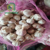 2017 chinese fresh natural white garlic price in dubai