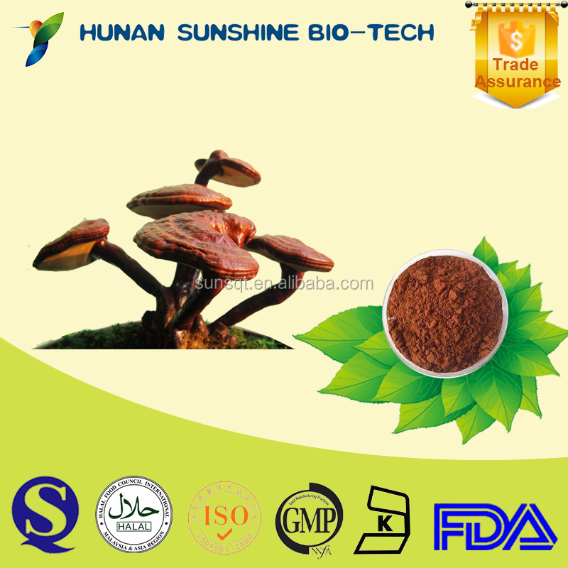 china natural product ganoderma extract Reishi Mushroom Polysaccarides 10% Triterpene 3%