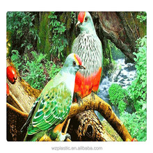 Animal Bird 3D picture/3D lenticular picture/3D picture of bird
