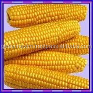 yellow corn animal feed for export to malasia