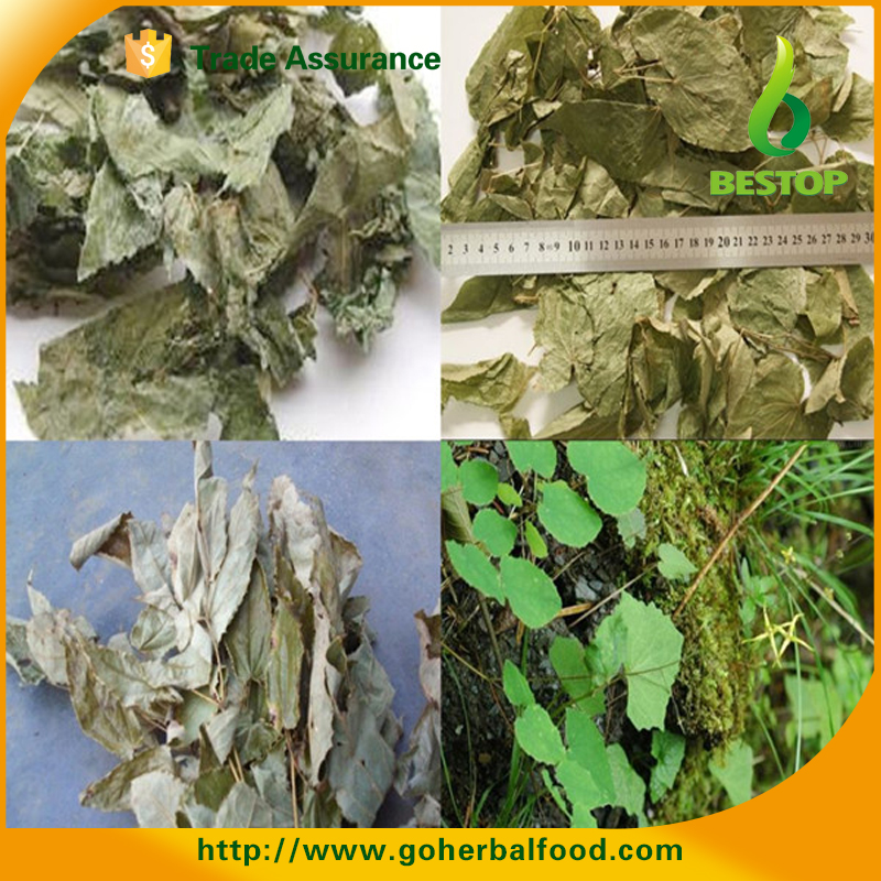 epimedium extract botanical extract
