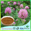 Natural Traditional Herb Product Best selling plant extract Red Clover Extract